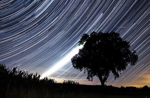 Star trails achter het silhouet van een boom