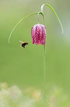 bumblebee sur Pim Leijen