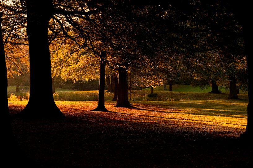Herfst van Sander Strijdhorst