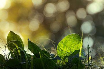 Zo ziet de kikker zonsopkomst van Frans van Dam