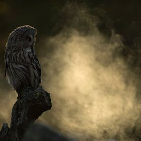 Chouette barbu (nébuleuse de Strix) assise dans la lumière du petit matin sur un rocher exposé, brou sur wunderbare Erde