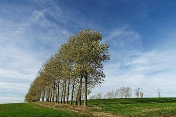 Rij bomen op geoogst veld