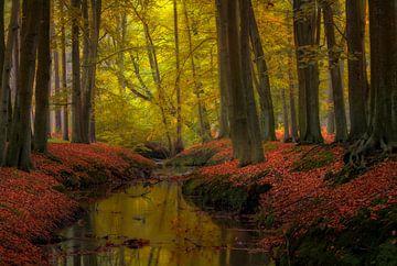 Herbst im Wald von Jos Pannekoek