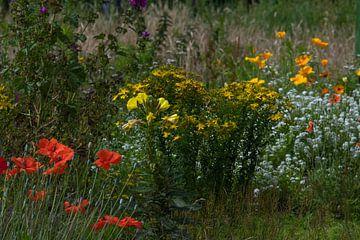 Wilde bloemenveld met gele, witte en rode bloemen van JM de Jong-Jansen