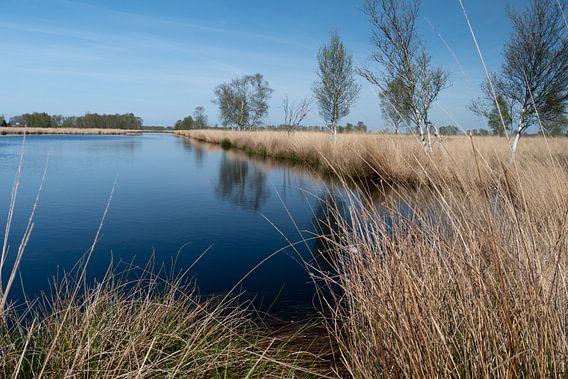 water, droog gras en een bomen rij in het bargerveen