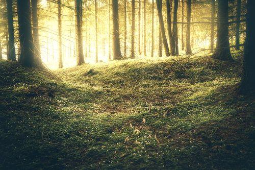 Goldiger Sonnenaufgang im Wald