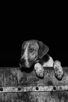 Jagdhund mit Beinen über der Tür von Caroline van der Vecht