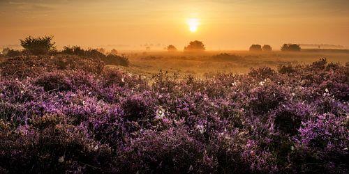 Gele zonsopkomst in een paarse wereld