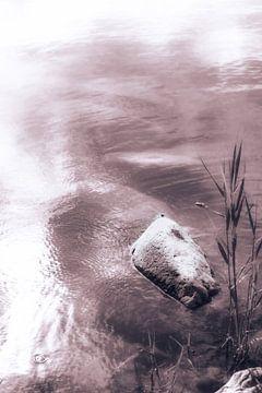 Riet en steen in het meer - Zwemmen tegen de stroom in van Jakob Baranowski - Off World Jack