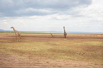Giraffen van Gonda van Wijk