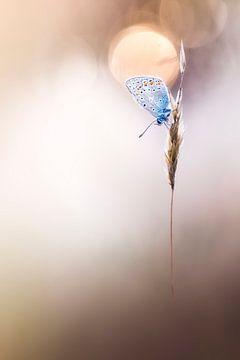 Sleepy Butterfly van Bob Daalder