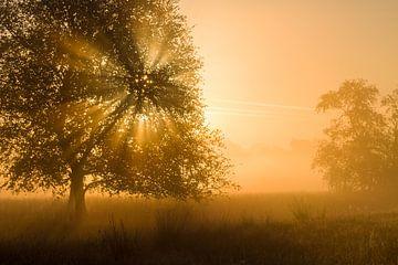 Gouden licht op de Strabrechtse heide van Joep de Groot