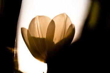 Tulpe von Vliner Art