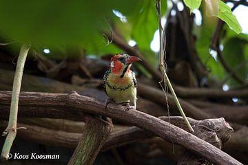 Vogel Schuilt In Een Warm Plek von Koos Koosman