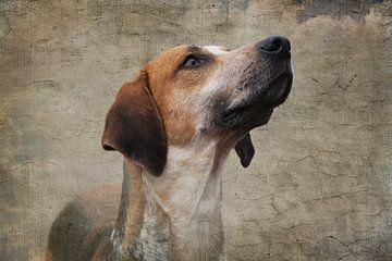 Foxhound on canvas von Wybrich Warns