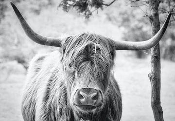 Scottish Highlander schwarz/weiß von Wendy Tellier - Vastenhouw