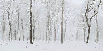 Königlichen wald001 von Gerhard Niezen Photography