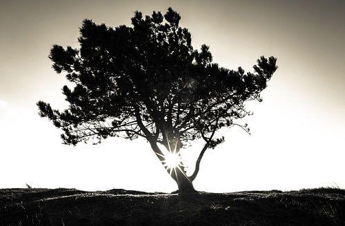The lonely tree von Mark Eckhardt