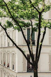 witte luiken in Parijs