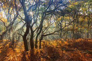 Vier bomen, dansend in de zonnestralen van
