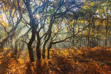 Vier bomen, dansend in de zonnestralen sur