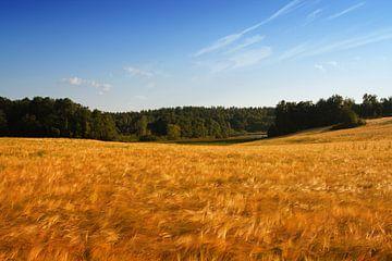 the grainfield van Bernd Hoyen