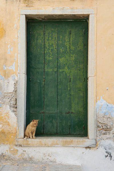 Katze für alte Tür von gj heinhuis