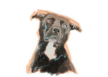 Staffordshire Terrier von Wilfried van Dokkumburg
