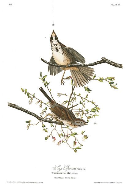 Zanggors van Birds of America