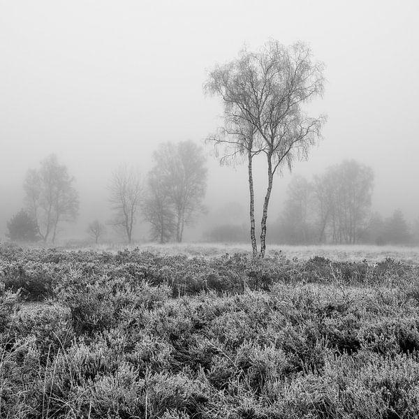 De Meinweg - Misty Morning in Black and White van Teun Ruijters
