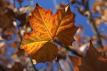 The Autumn Leaf sur Cornelis (Cees) Cornelissen