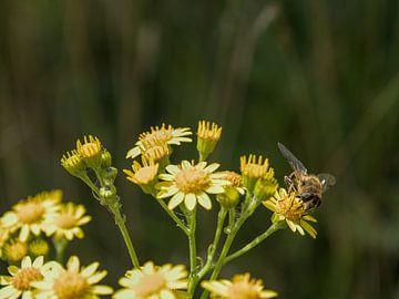 Glückliche Biene auf einer Blume von Hannon Queiroz