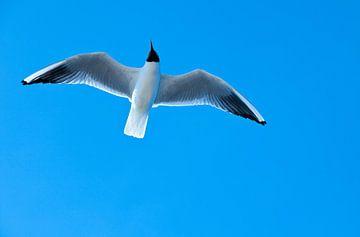 Zeemeeuw in de lucht. van Hennnie Keeris
