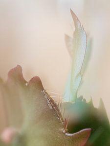 Cactus von Boudewijn Swanenburg