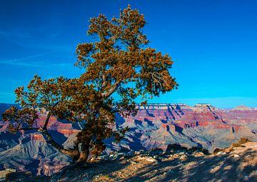 Boom voor de Grand Canyon, VS van Rietje Bulthuis