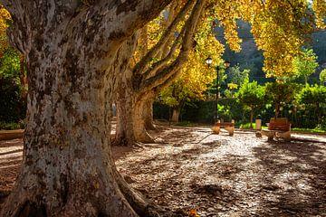 Bäume von Els Hattink