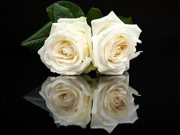 Zwei weiße Rosen mit Spiegel Reflexion auf schwarzem Hintergrund von Ben Schonewille