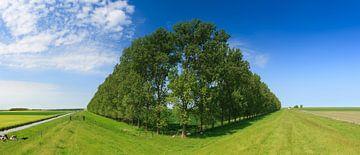 Komposition mit Bäumen, Groningen, Niederlande von Henk Meijer Photography
