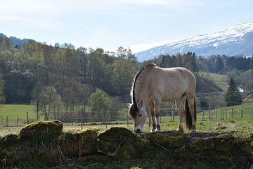 Fjordenpaard in Noorwegen van Sylvia van der Hoek