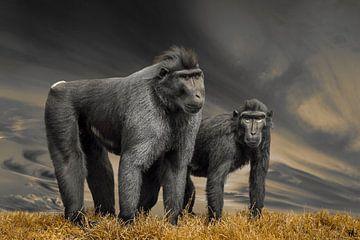 Serieuze apen van Fred Leeflang