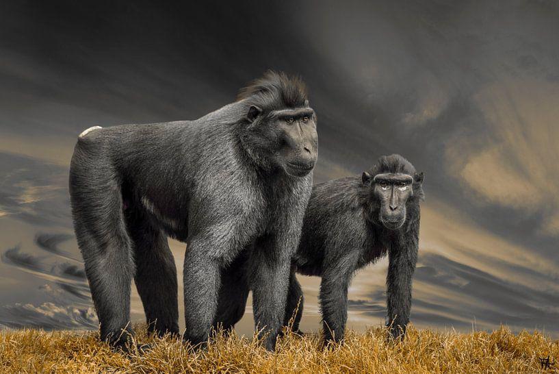 Ernste Affen von Fred Leeflang