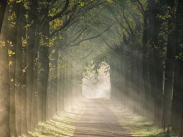 Nevelige ochtend in het bos van Peet Romijn