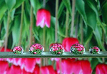 Wassertropfen mit Reflexion der Tulpen von Inge van den Brande