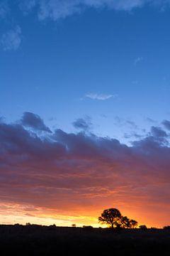 African sunset 02 von Studio voor Beeld