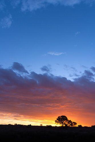 African sunset 02 van