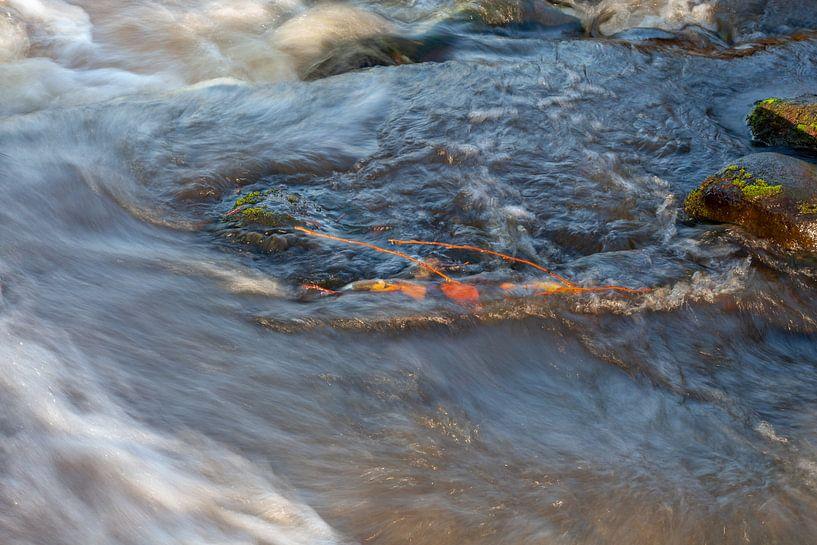 Herfstbladeren in Woest Water van R Smallenbroek