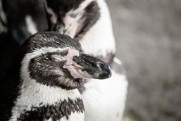 Schlafender Pinguin von Natasja Bittner
