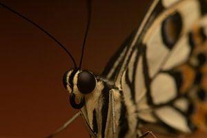 Schmetterling von my KOOL moments