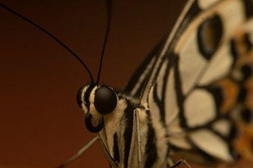 Vlinder, Vlindorado - Nederland van Danielle Kool