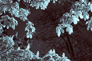 Kastanjeboom in de lente van Raoul Suermondt